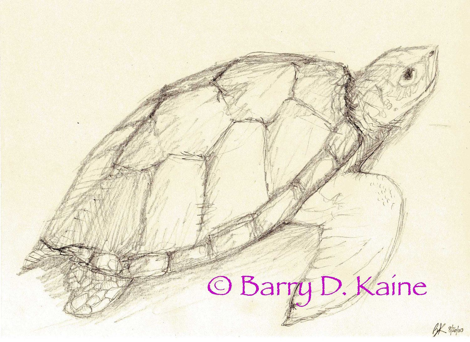 Sea turtle pencil drawing 680 print sketch ideas pencil drawings