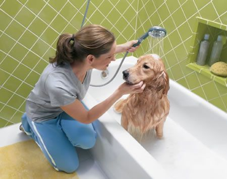 Make Easy To Bath Your Pet Dog Dog Shampoo Homemade Dog Shampoo