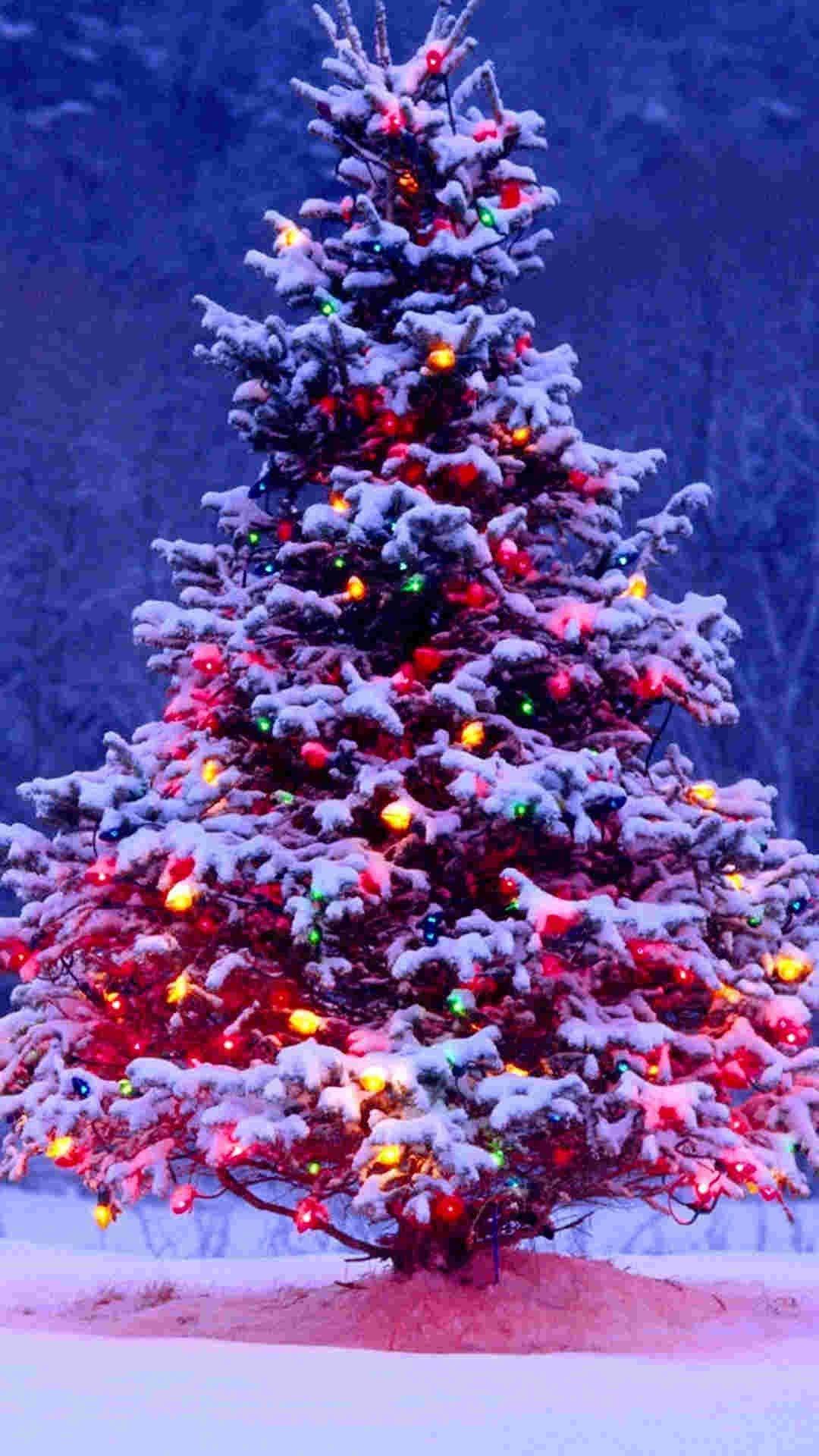 Snowy Christmas Tree.Pin On 2014 Christmas Tree Iphine 6 Plus Wallpaper