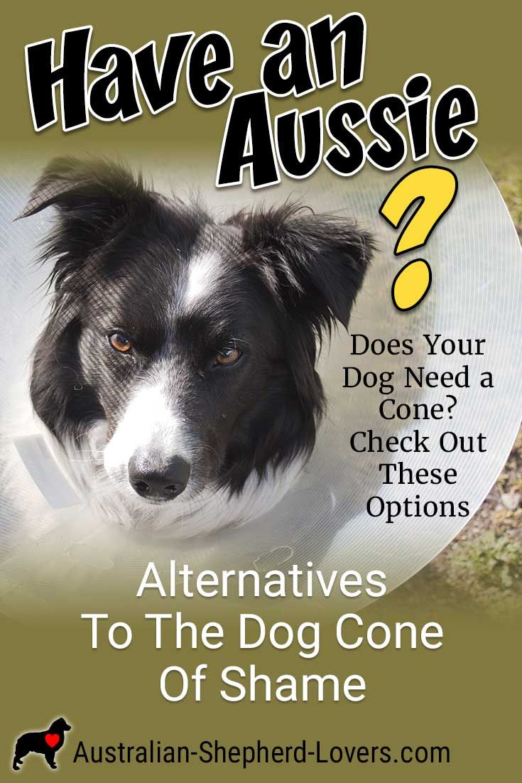 Alternatives to the dog cone of shame for your australian