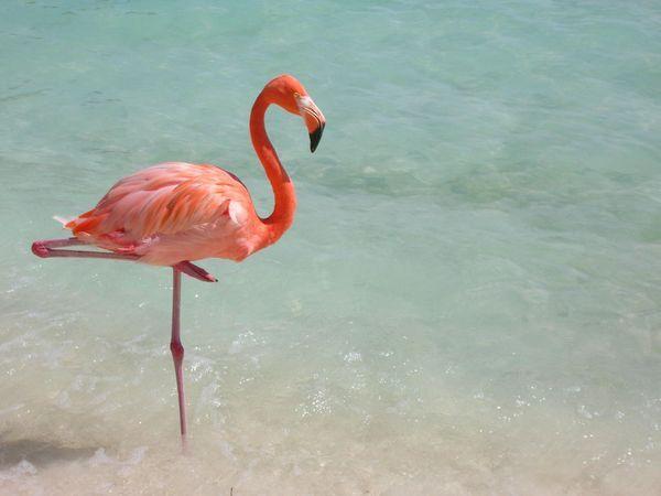 Your Caribbean Photos National Geographic Beautiful Birds Natural Curiosities Bird Photo