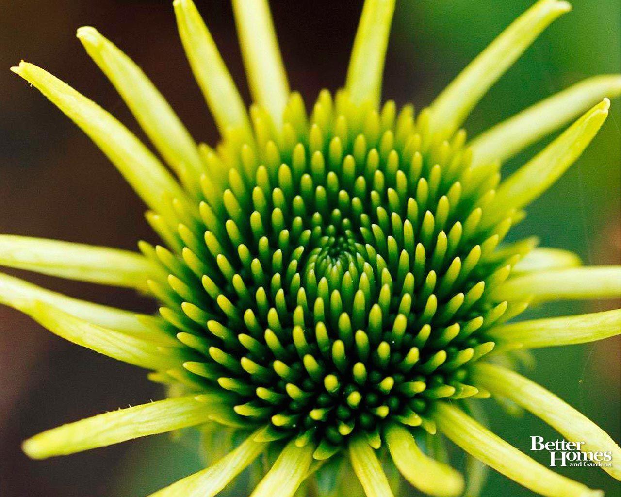 Park Art|My WordPress Blog_Better Homes And Gardens Desktop Wallpaper