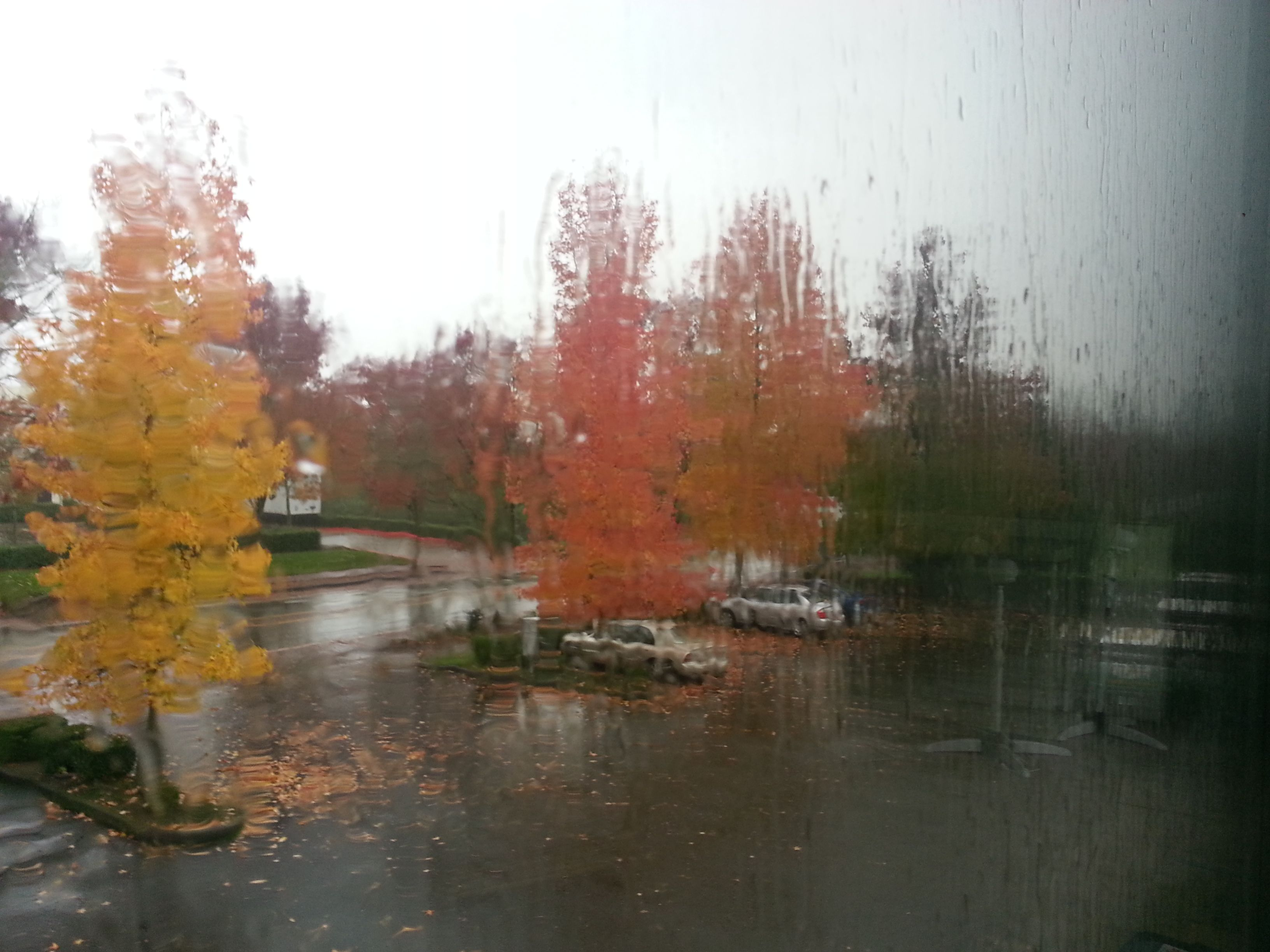 The view from the mezzanine at work today enhances the dripping effect of the rain, it also washes out the brilliance of autumn, until the sun pops out again.