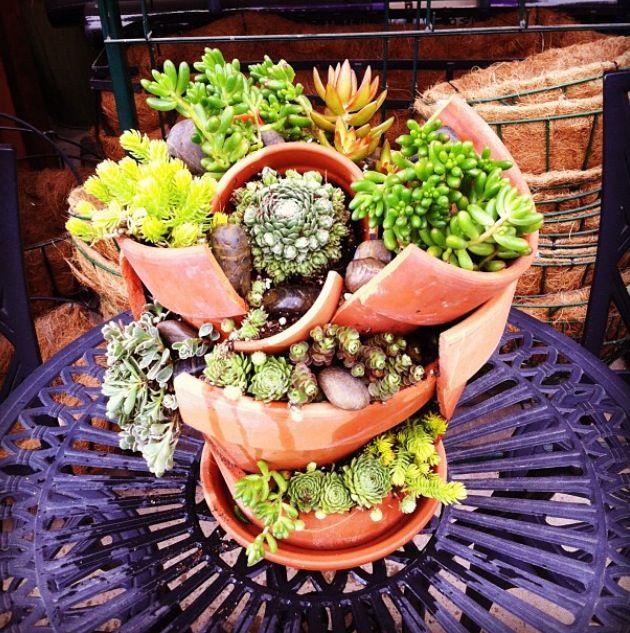 Broken pot succulent arrangement