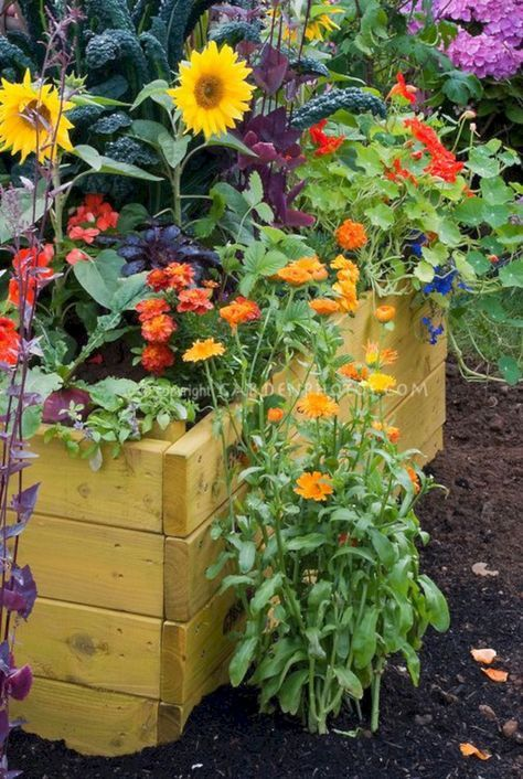 Incredible 5 Sun Flower Garden Design Ideas is part of Sunflower garden, Marigolds in garden, Garden soil, Flower garden design, Garden design, Flower garden - Your garden sunflower is probably going to appear good only if everything is accomplished in a sort of proportion  Last, think about the time you would rather devote to your garden  Possessing a lo…