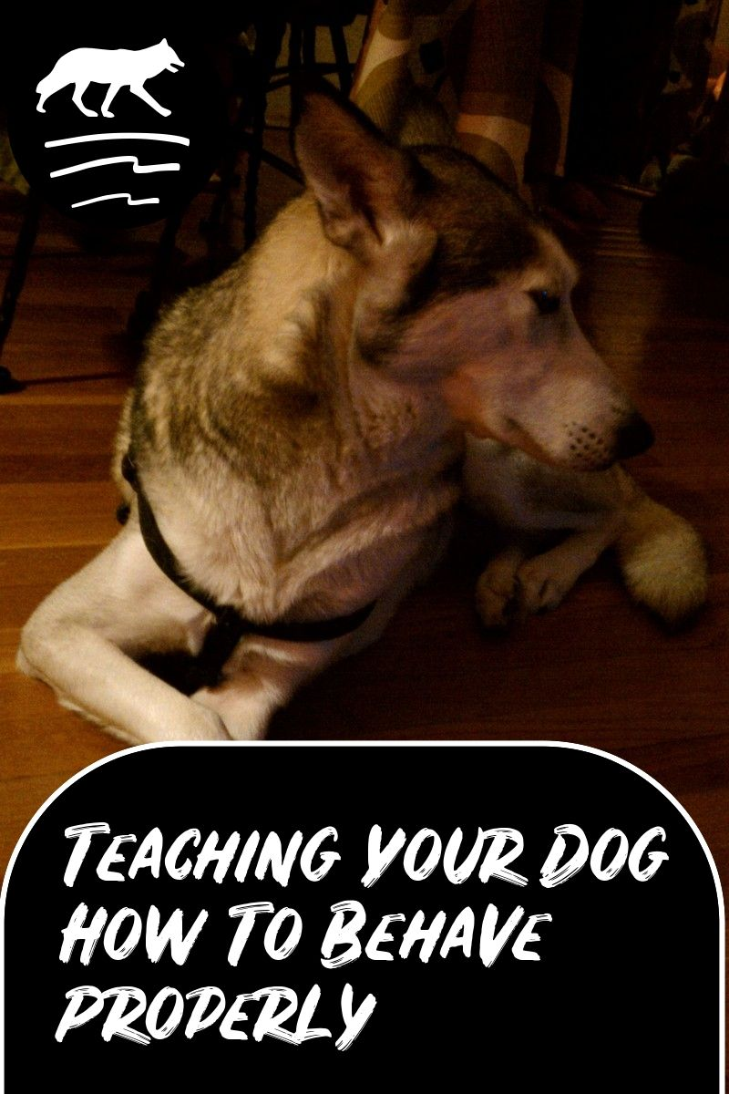 Easy Ways To Improve Your Life With Your Dogs Dogs Your Dog Pet Care Dogs