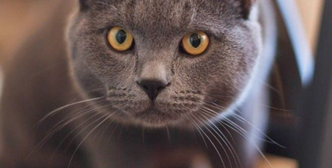 ما حكم بيع وشراء القطط Bubblews Cats Cat Facts Cat Behavior