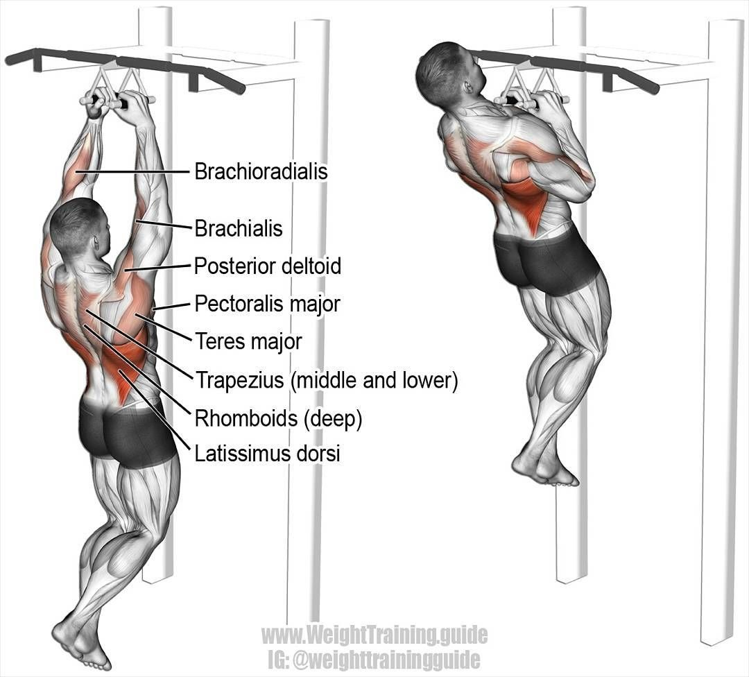 Debuter La Musculation A La Maison Musculation Dos Musculation