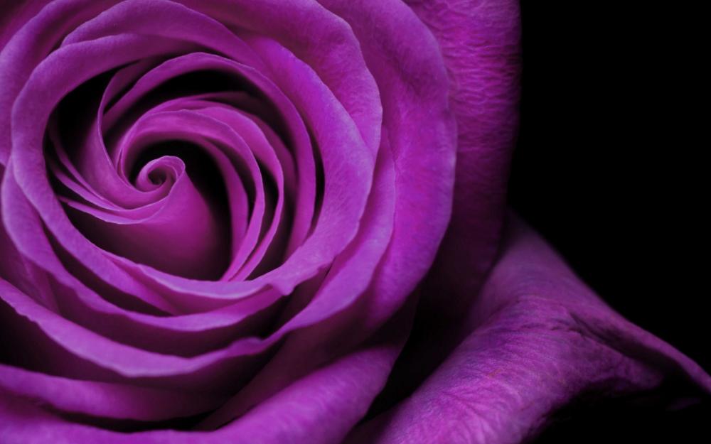 70 dark purple flower wallpapers   download at