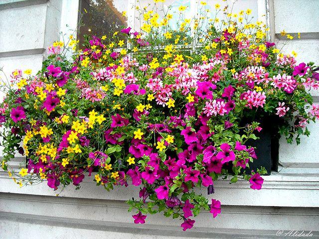 London Flowers Gorgeous Window Boxes Window Box Flowers Window Box Garden