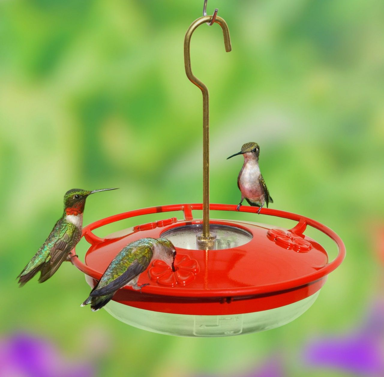 Common problems with hummingbird feeders what to do