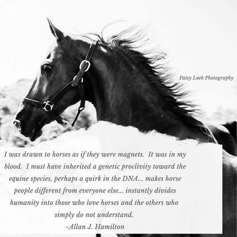 Pin by Jean Ann Bray/Collins on Love my Horses in 2020