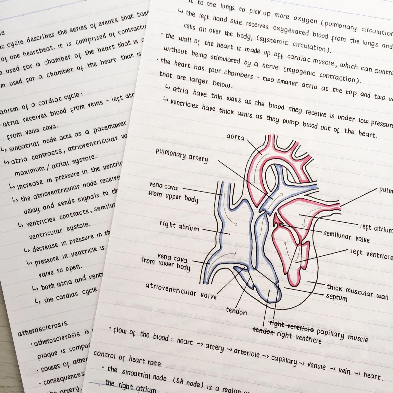 NOTE-TAKING: TIPS + FLIPTHROUGH - IB BIOLOGY | studycollab ...