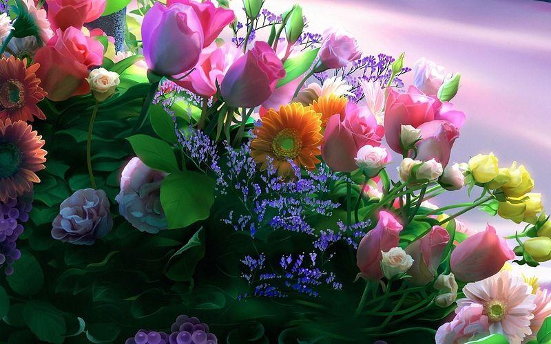 Обои на рабочий стол цветы ромашки