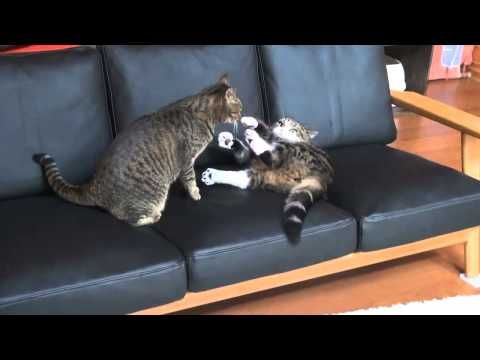 Funny Pictures Of Cats Doing Funny Things