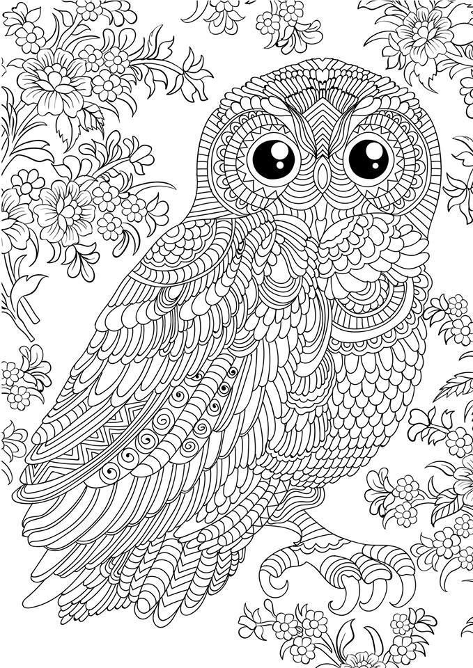 free owl coloring pages for adults - 1928841 10156534814880045 8464913795688162808 679