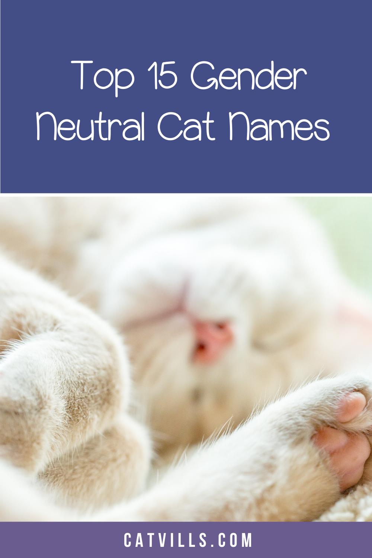 15 Unique Adorable Unisex Cat Names Catvills In 2020 Cat Names Kitten Names Cats
