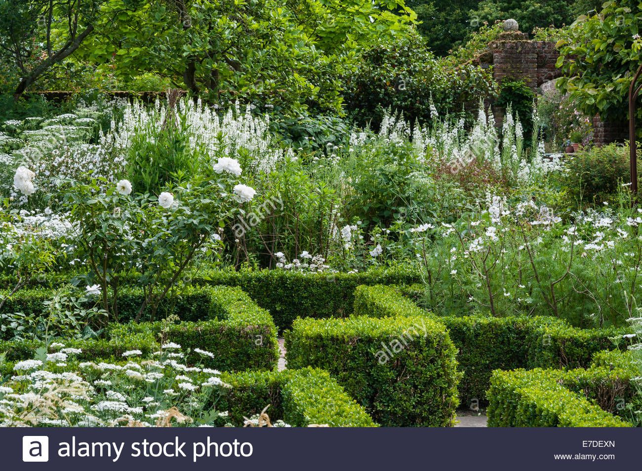 Sissinghurst Castle, Kent. Parterres In The White Garden In Summer Stock Photo, Royalty Free Image: 73441165 - Alamy