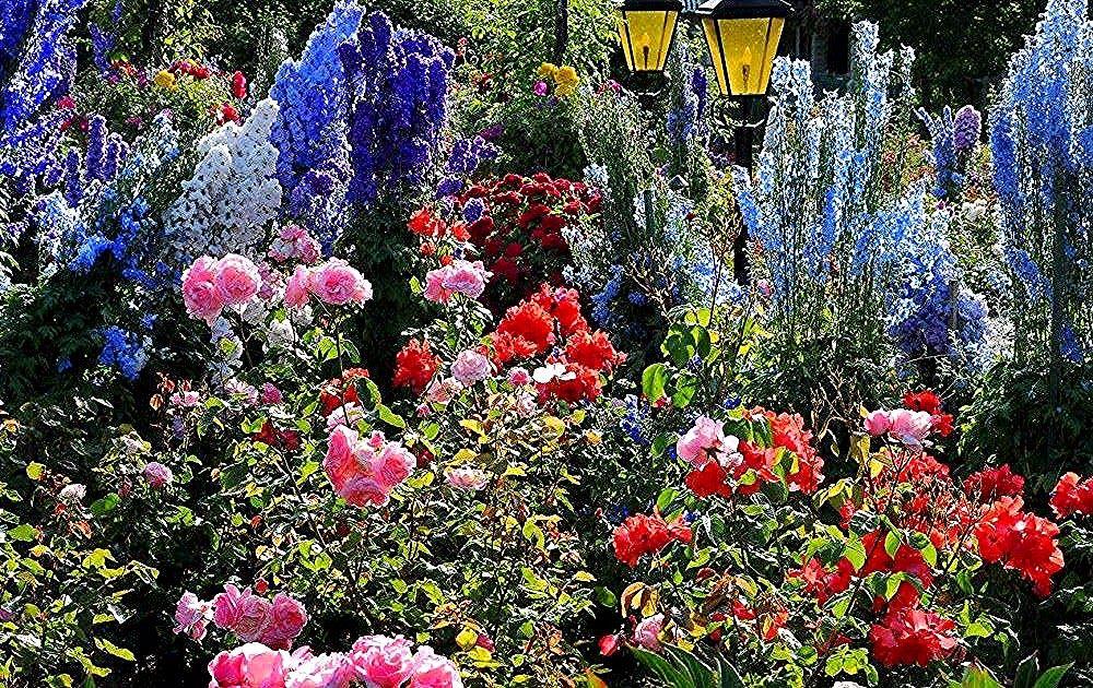 Gambar Bunga Mawar Cantik Wallpaper Foto Dan Gambar Bunga Cantik Untuk Laptop Tuhan Memang Maha Indah Dan Men In 2020 Beautiful Roses Beautiful Rose Flowers Flowers