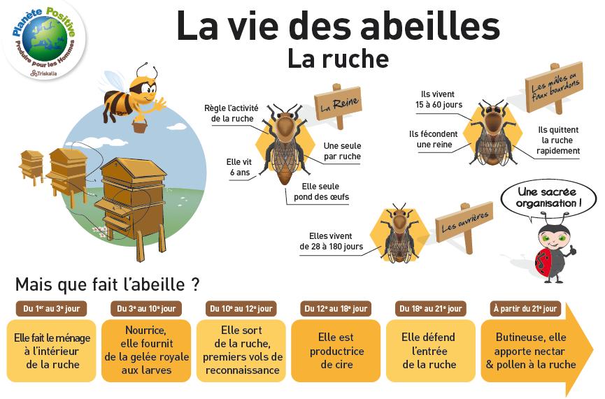 Cycle des abeilles recherche google les abeilles - Comment faire fuire les abeilles ...