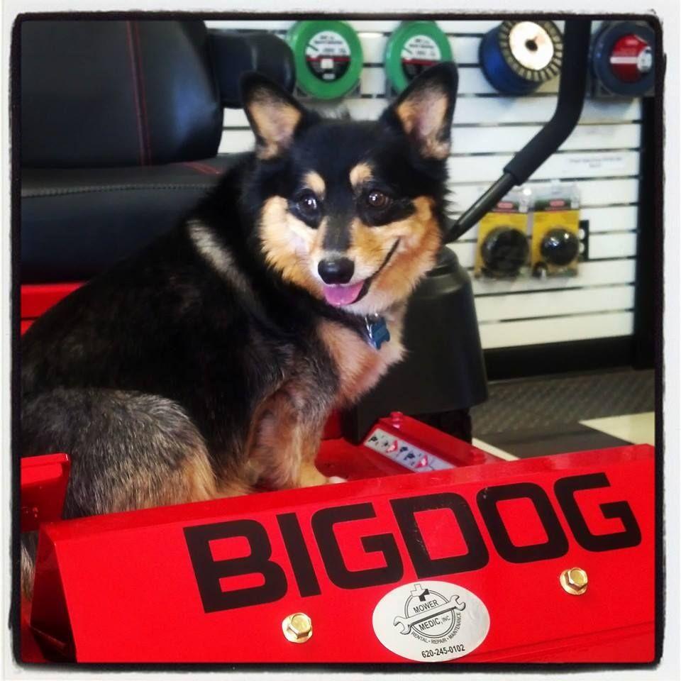 Meet Murphy, head sales dog at Mower Medic in McPherson, Kansas