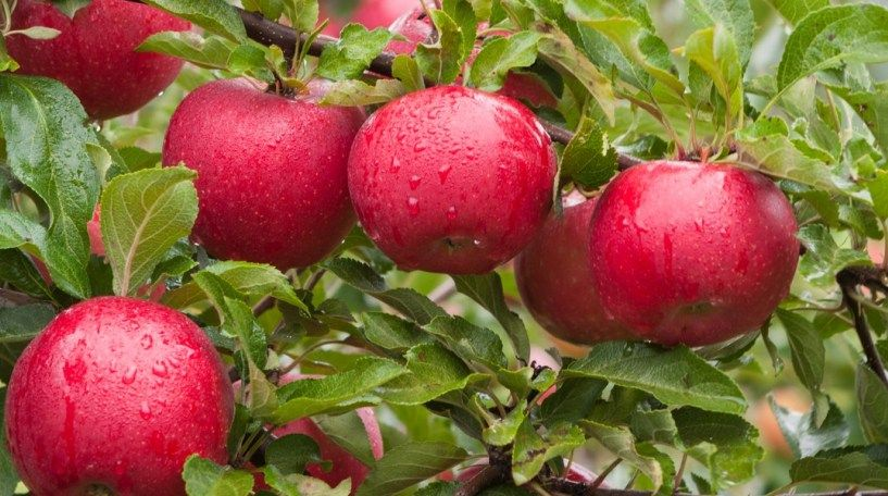 How To Plant Fruit Trees And Why Fall Is The Best Time To Plant Fruit Trees Trees To Plant Plant Roots