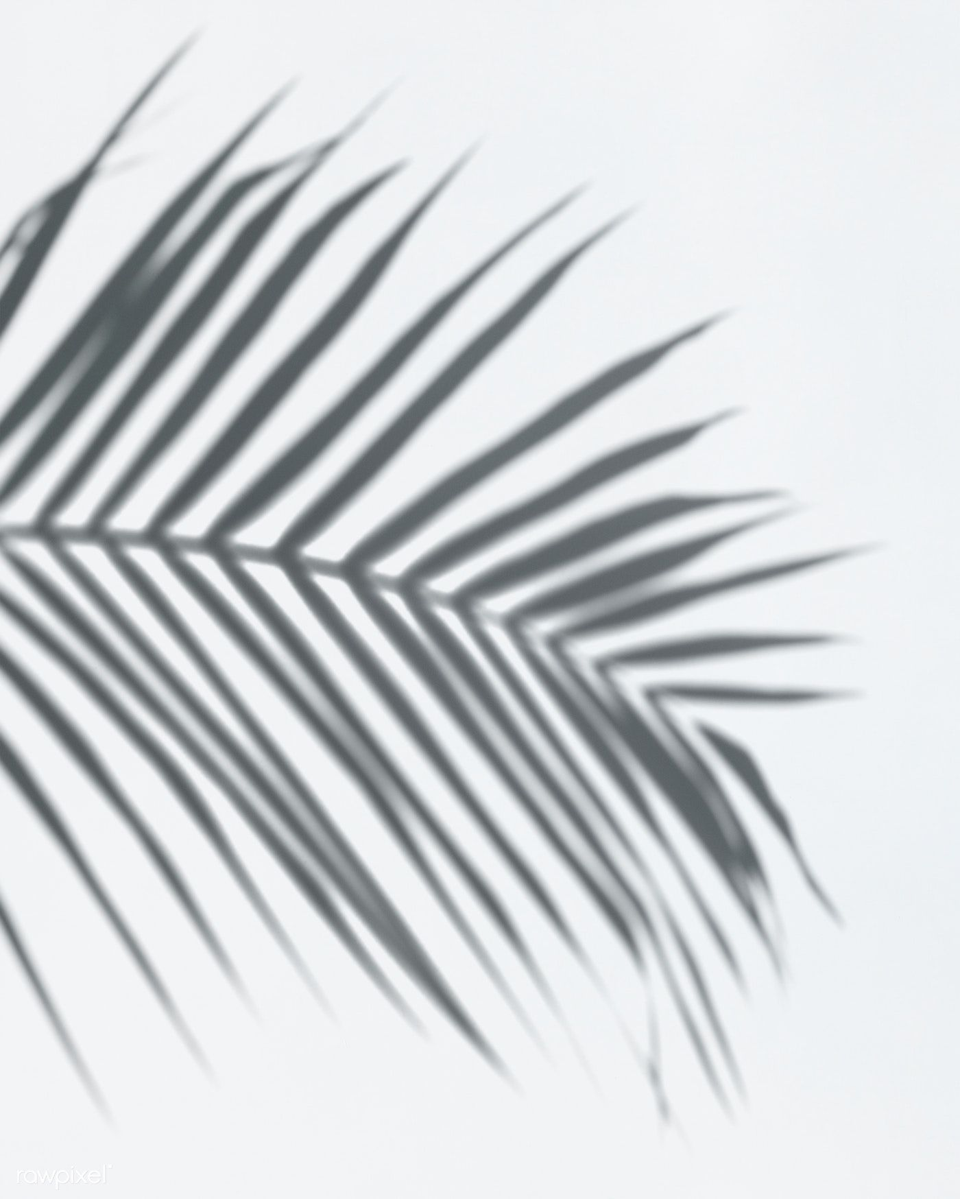 Download Premium Psd Of Shadow Of Palm Leaves On A White Wall 556145 Shadow Photography Shadow Palm Leaves