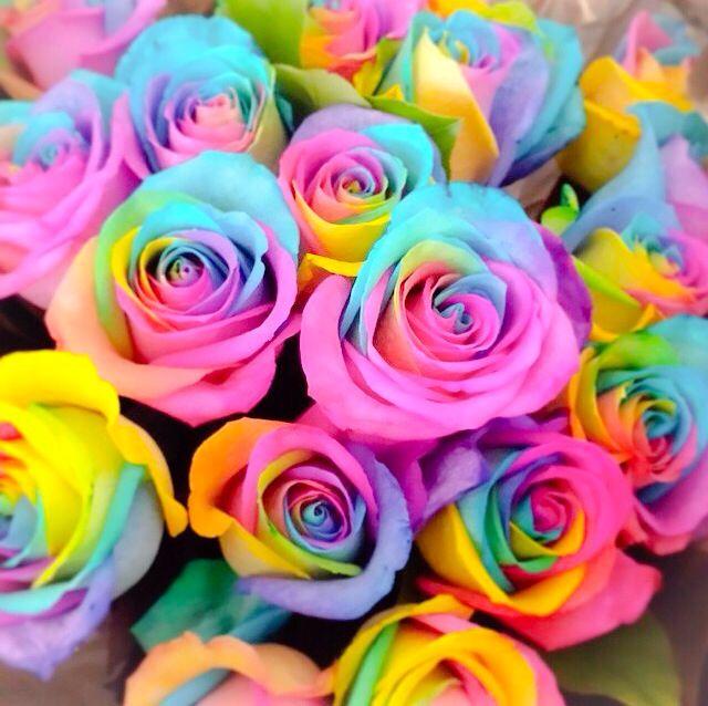 Riทtyeryest Kaℓyeynsggℓye With Images Rainbow Roses Rainbow