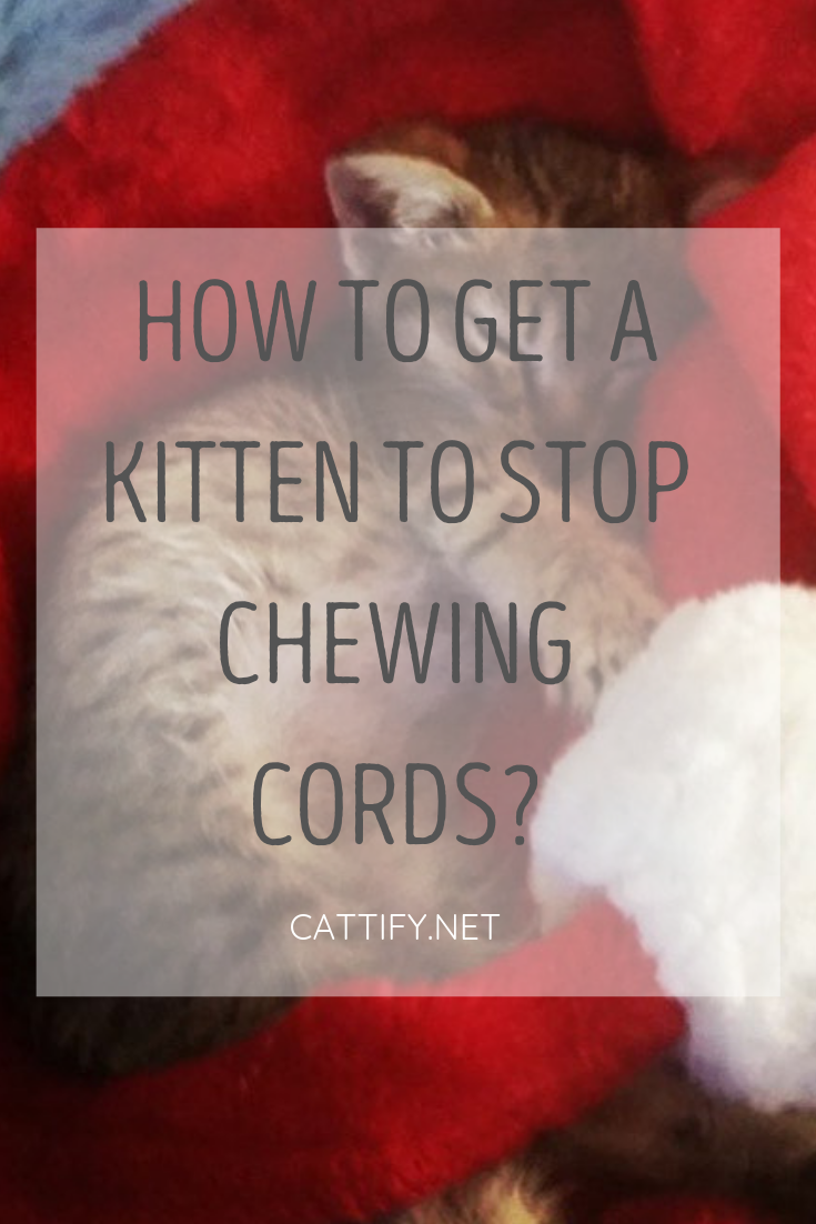 How To Get A Kitten To Stop Chewing Cords Getting A Kitten Kitten Cat Behavior