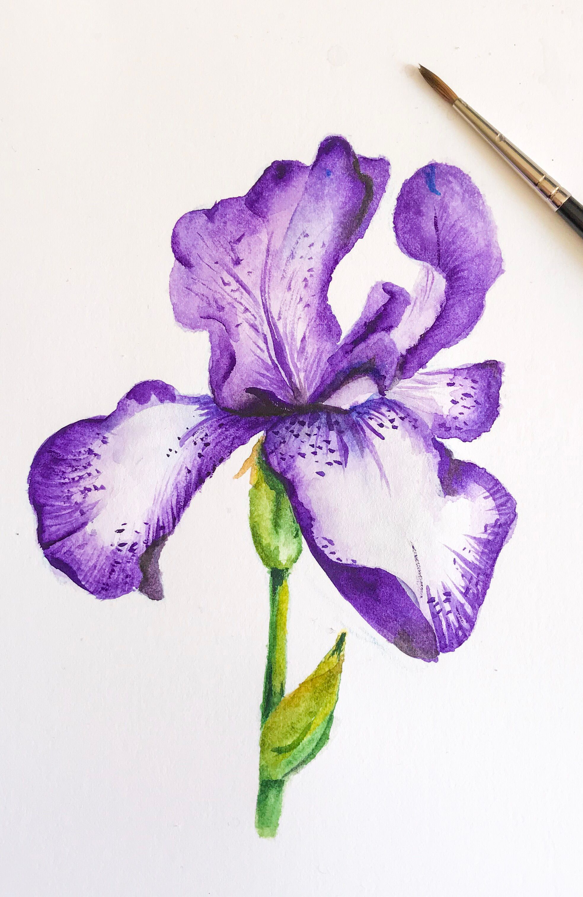 Watercolour Iris Flower Watercolour Watercolor Iris Flower Art Artwork Handpainted Painting Lo Flower Art Drawing Flower Drawing Iris Painting