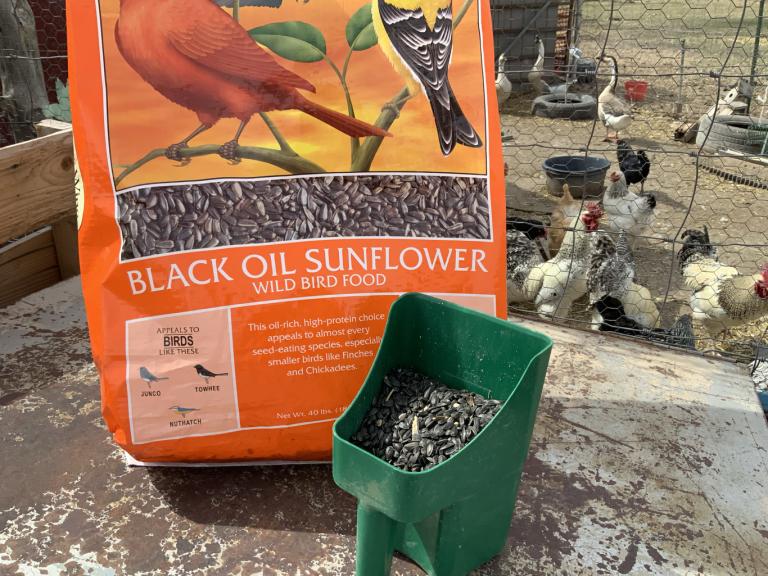Bag And Scoop Of Black Sunflower Seeds Black Oil Sunflower Seeds Wild Bird Food Black Sunflower Seeds
