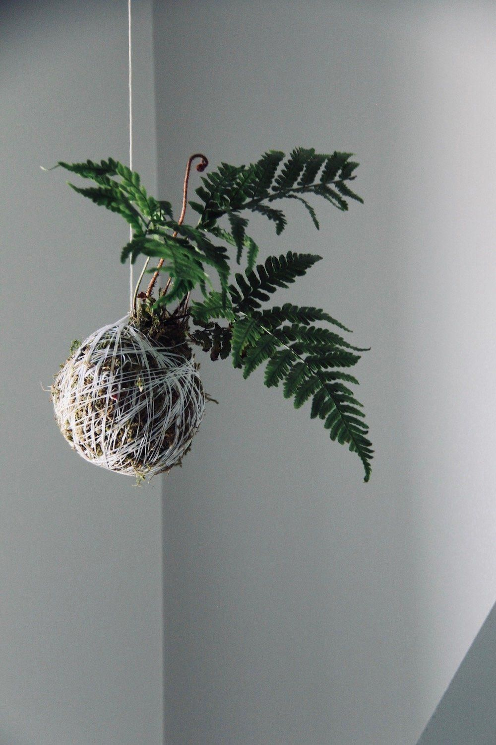 SO making this fern kokedama this weekend! I love hanging string gardens and this is perfect for my ensuite bathroom #houseplants #stringgardens #kokedama #bathroomplants #Kokedamascolgantes