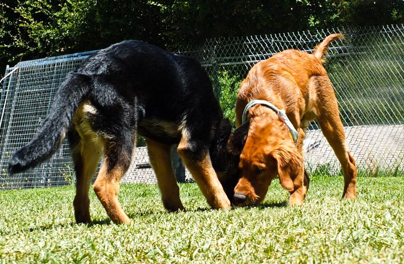 Puppies are taught appropriate play with boundaries, rules