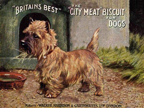 Cairn Terrier Dog Food Advert Dog Art Print 8 X 10 Ready To Frame