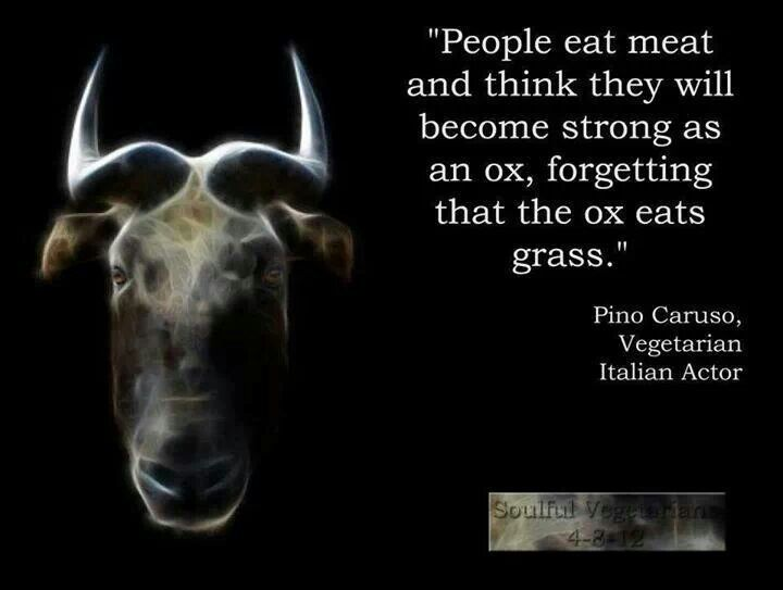 Mmmm very good point! The ox eats grass to be strong. You do not need meat to be strong!