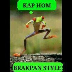 Brakpan   Funny animals, Brakpan, Funny