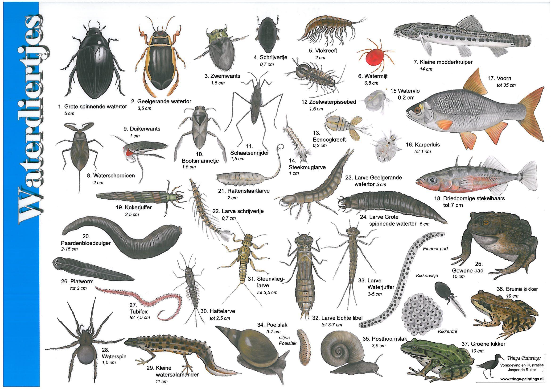 Afbeeldingsresultaat voor waterdiertjes zoekkaart