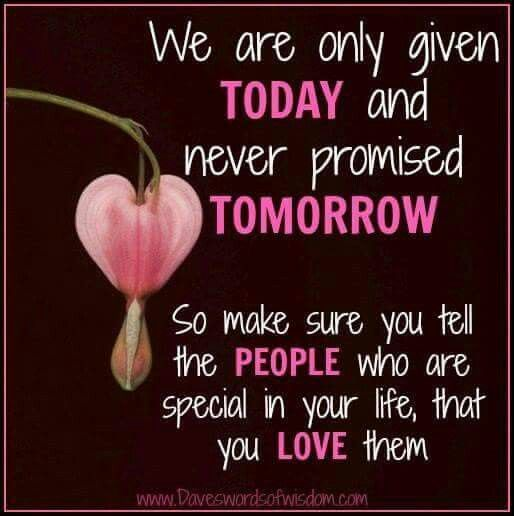 Tck Memes Beautiful Pink Flowers Fancy Flowers Pink Flowers
