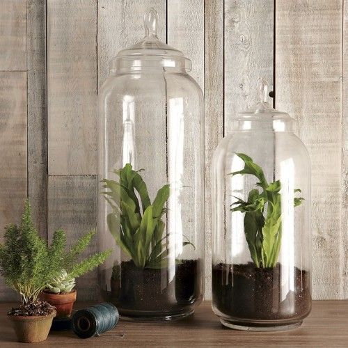 DIY glass jar terrariums. Perfect for gardening in small spaces.