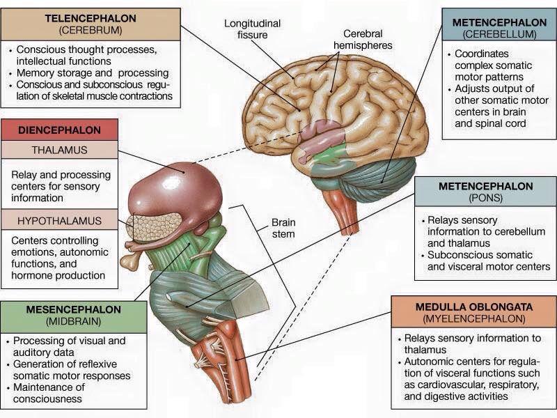 Neurología...   Medicine   Pinterest   Neurología