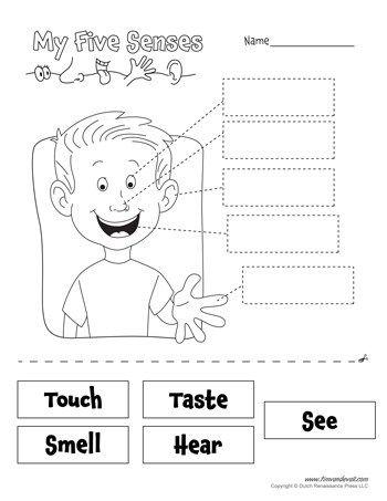 senses worksheet  teaching  pinterest  senses preschool five   senses worksheet