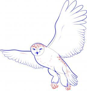 how to draw a snowy owl step 8 drawing tutorials pinterest