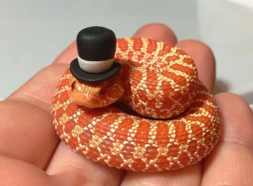 25 Cute Snakes You Have to See (With Pictures)
