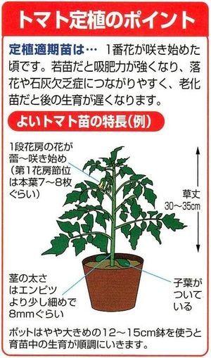 春から始める野菜作り プランターで苗から育てるミニトマトは 手軽で