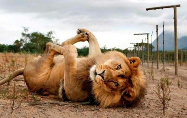 "... Animals ""Posing"" .."