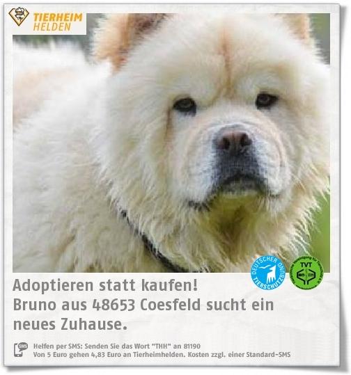 Bruno kam aus einer Zuchtauflösung ins Tierheim Coesfeld