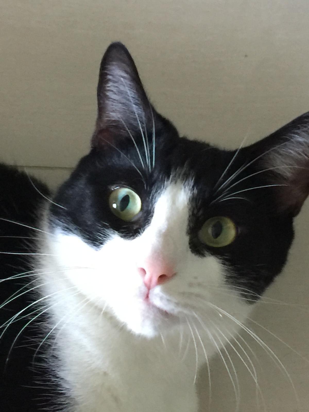 ᕈᏋɬɨɬᏕ ʄᏋℓɨŋᏕ (With images) Cute cats and kittens, Cute