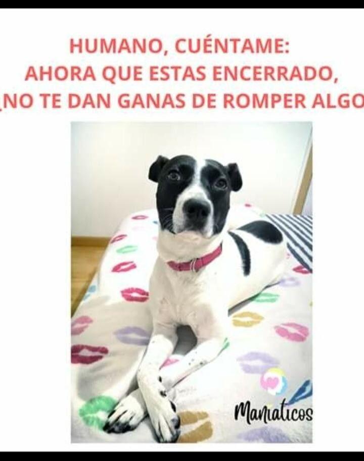 Pin De Carolina Orellana En Amor A Las Mascotas En 2020 Memes De Perros Chistosos Memes Divertidos Mascotas Memes