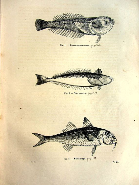 1860 Curious antique fishes engraving strange by LyraNebulaPrints, $24.95