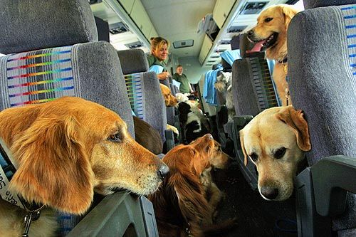 """The first major airlift of dogs from the hurricane-battered Gulf Coast left Louisiana on Sunday, carrying about 80 pets to new temporary homes in California. The Continental Airlines flight from Baton Rouge, Louisiana, was chartered for about 50,000 by Texas oil tycoon Boone Pickens and his wife, Madeleine, in a movement dubbed """"Operation Pet Lift."""" Some dogs were placed in cages in the cargo section while others rode in the passenger cabin, where they barked and wagged their tails. 2005 ♥"""